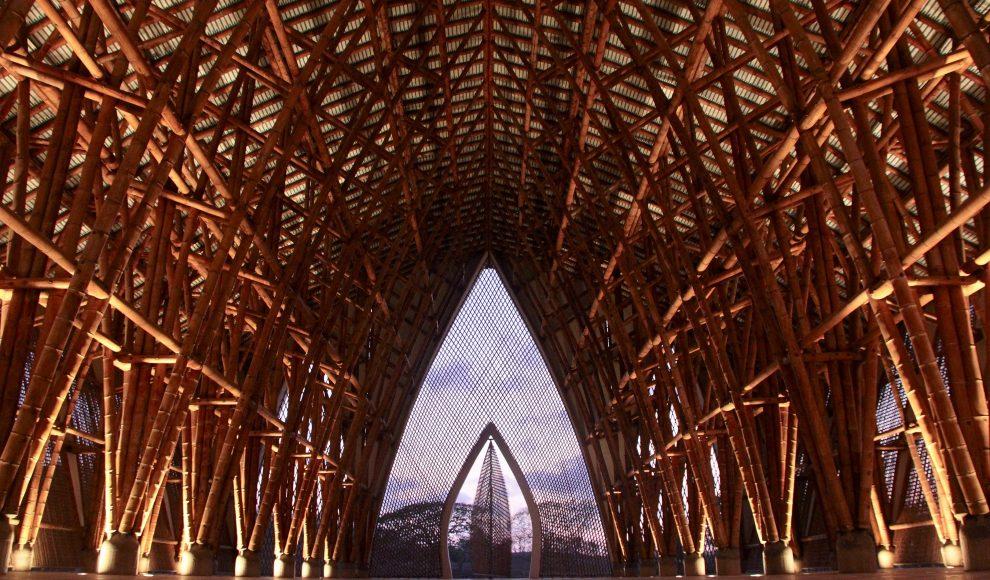 Revista Painel traz panorama sobre o bambu