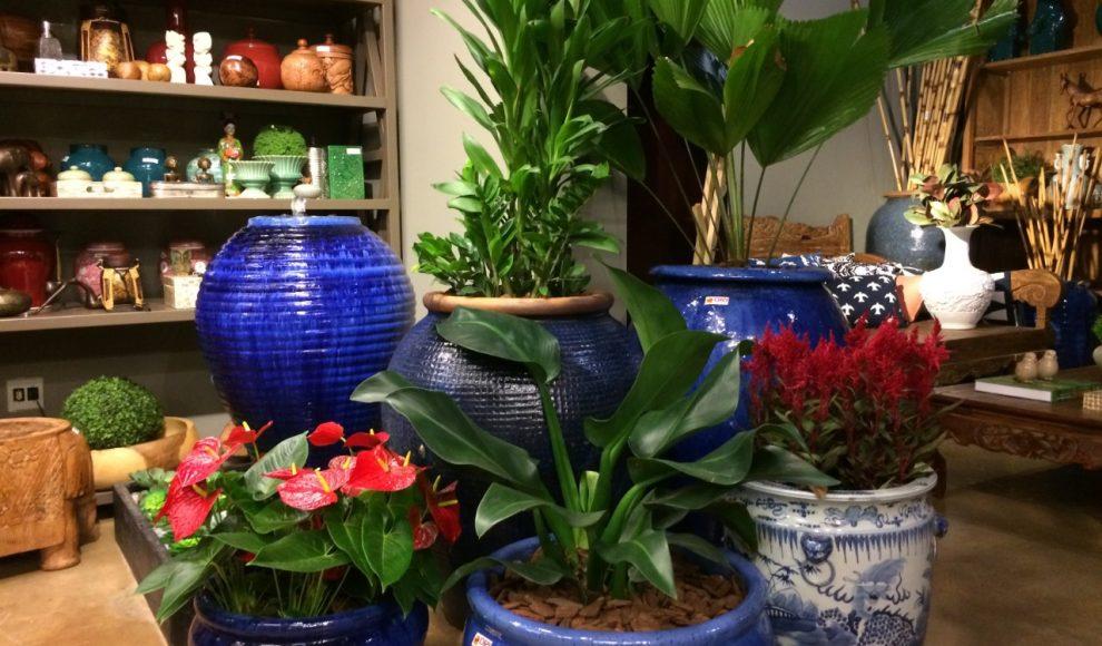 Paisagista explica como preparar jardins e vasos para a Primavera